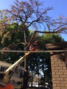 tree removal Homebush West