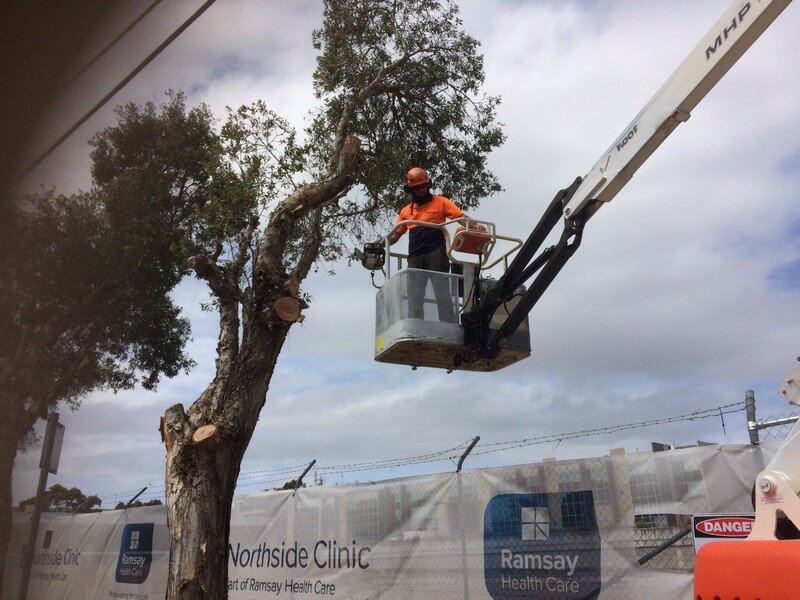 professional tree Pruning & Trimming Sydney wide