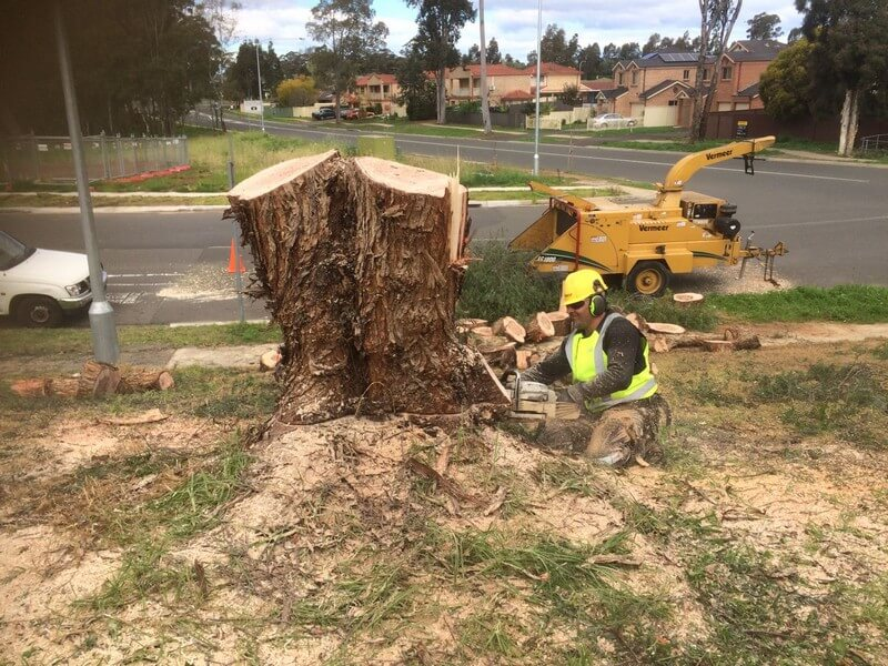 North Sydney affordable Tree Removal Sydney