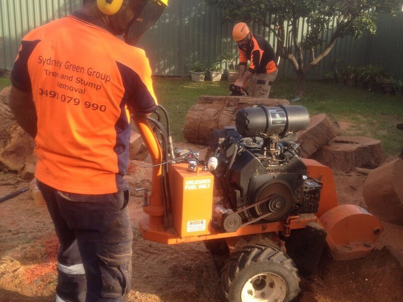 North Sydney affordable stump grinding service near me