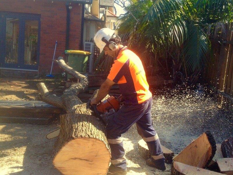 Emergency Tree Removal Sydney wide
